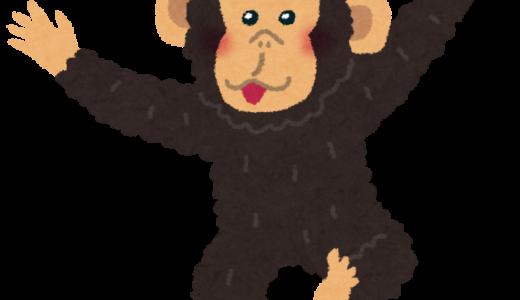 つぶらな瞳のチンパンジーのファラーに心奪われる51歳。